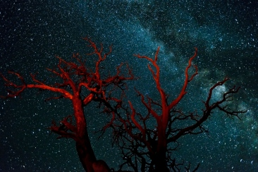 Canyon_Lands_DeadTree_Milkyway
