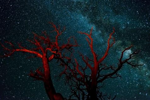 Canyon_Lands_DeadTree_Milkyway