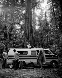 CC_Redwoods