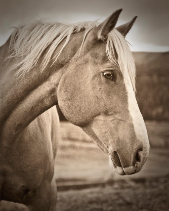 dallas_profile_sepia