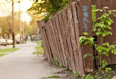 Fence_Vine_backlight
