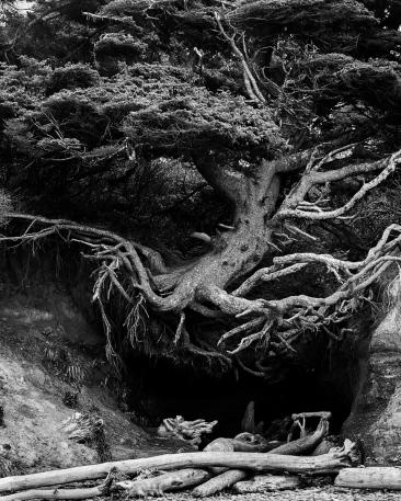 Olympic_Tree