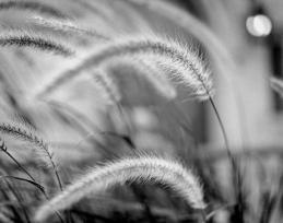 wheat_bouquet