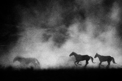 horses_abstract